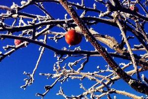 Bildspel-appelgarden-08-1024x683